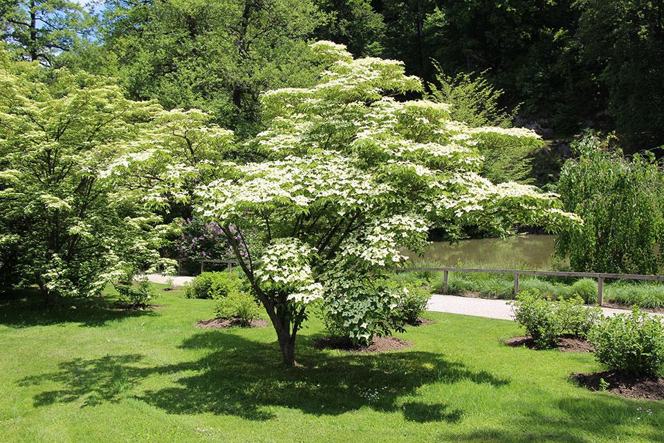 cvetoča drevesa za vrt